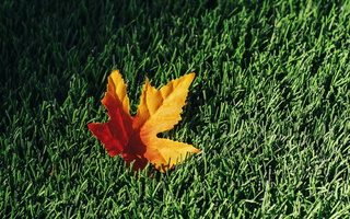 Fall Leaf on AstroTurf 001