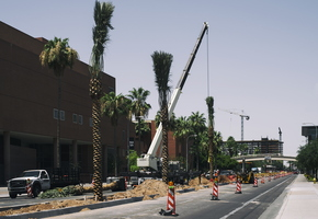 Palm Tree Planting with Crane University Dr Tempe