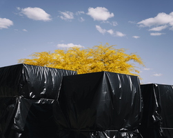 Crates wrapped black plastic yellow tree clouds pandemic covid-19